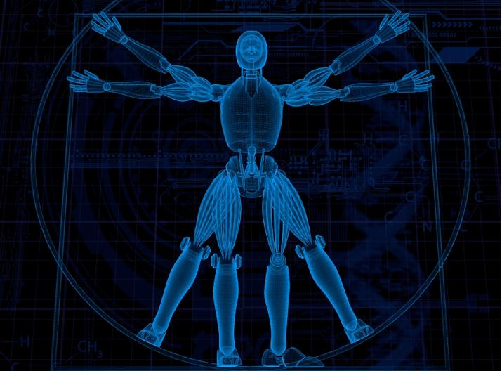 Image of  a digital vitruvian man