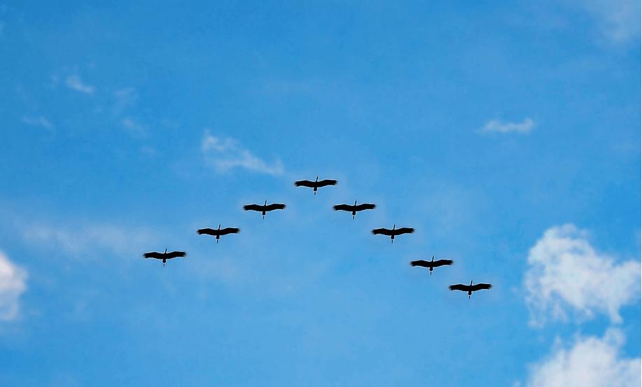 Image of birds migrating, representing a Magento migration